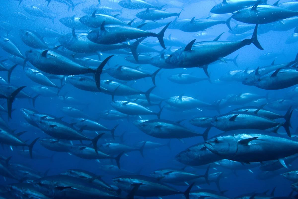 bluefin-photo-1200.jpg